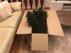 謎めいた箱の中身 gorgeous-tree2